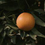 Масло от грейпфрут